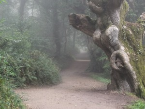 Photo from Pixaby.com http://pixabay.com/en/misty-fog-path-tree-forest-396700/